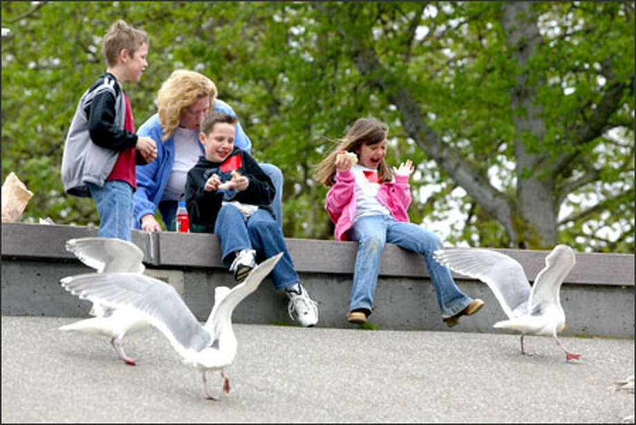 Orting student Bailey Meier, 6, right, enjoys watching a sea gull eat a piece of her peanut butter and jelly sandwich at the Seattle Center. Her classmate Darien Lambert, left, also fed the birds a turkey sandwich. And Brian Nielson offered cookies. His mother, Linda Nielson, is behind them. Photo: Karen Ducey, Seattle Post-Intelligencer / Seattle Post-Intelligencer