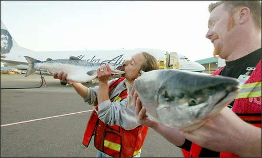 The first Copper River salmon of the season arrived at Alaska Airlines' freight terminal at Sea-Tac Airport Tuesday morning -- and received an enthusiastic greeting from Erik Espinoza, left, of Pike Place Fish Co.  Co-worker Dan Bugge looks on at right. More than 160,000 pounds of the coveted fish will arrive in Seattle today from Cordova, Alaska, and then be shipped to cities across the country. Photo: Paul Joseph Brown, Seattle Post-Intelligencer / Seattle Post-Intelligencer