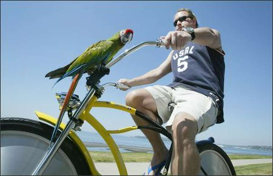 Rick Hansen and Oscar, Hansen's military macaw parrot, cruise along in the sunshine on Alki Beach in West Seattle on Tuesday. Photo: Dan DeLong, Seattle Post-Intelligencer / Seattle Post-Intelligencer