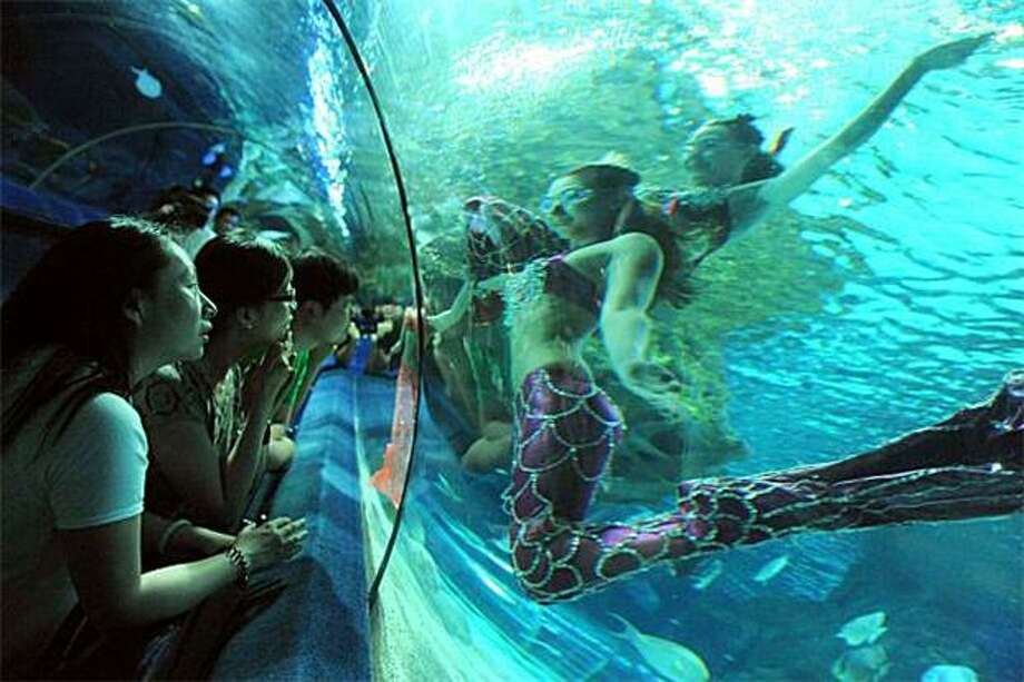 "Shaking their tails, ""mermaids"" dance underwater for the crowd at a Beijing aquarium for as long as their lungs hold out. Photo: Str, AFP / Getty Images / AFP / Getty Images"