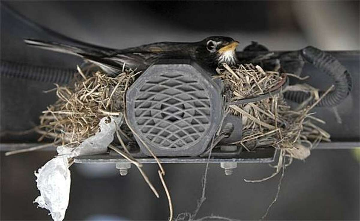 Mobile home: A bird who built her nest in the undercarriage of a schoolbus in Willow Street, Pa., sits quietly while driver Michelle Buse picks up and drops off kids on her daily 15- to 20-mile school district route.