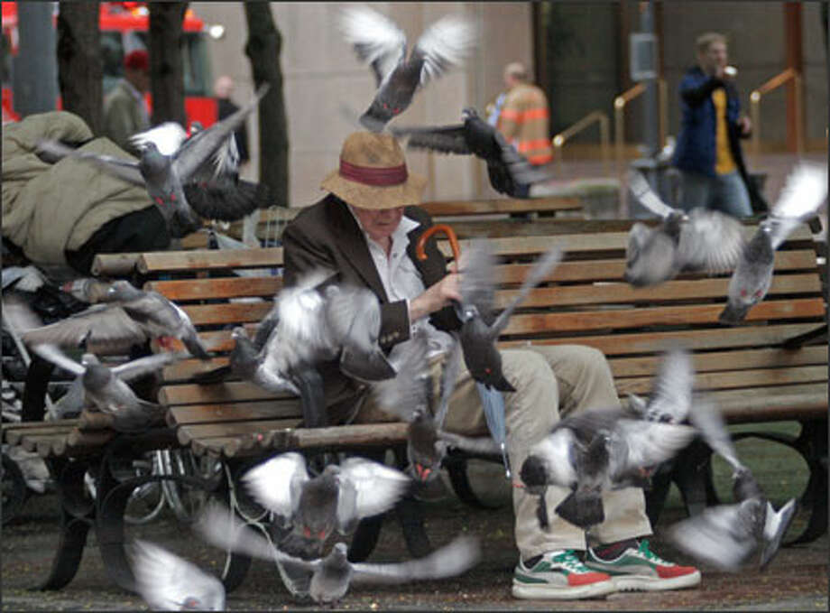 "Roger Moeller may look a bit overwhelmed, but he knows what he's doing as he feeds the pigeons in Westlake Park in downtown Seattle. ""I gave them cookies,"" Moeller explained. ""I gave them something sweet today."" Photo: Niki Desautels, Seattle Post-Intelligencer / Seattle Post-Intelligencer"