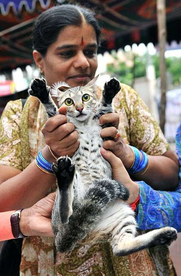 "I see your needle and raise you 18 claws: For a limited time, rabies shots are free at Super Speciality Veterinary Hospital's ""vaccination camp"" in Hyderabad, India. Photo: Noah Seelam, AFP / Getty Images / AFP / Getty Images"