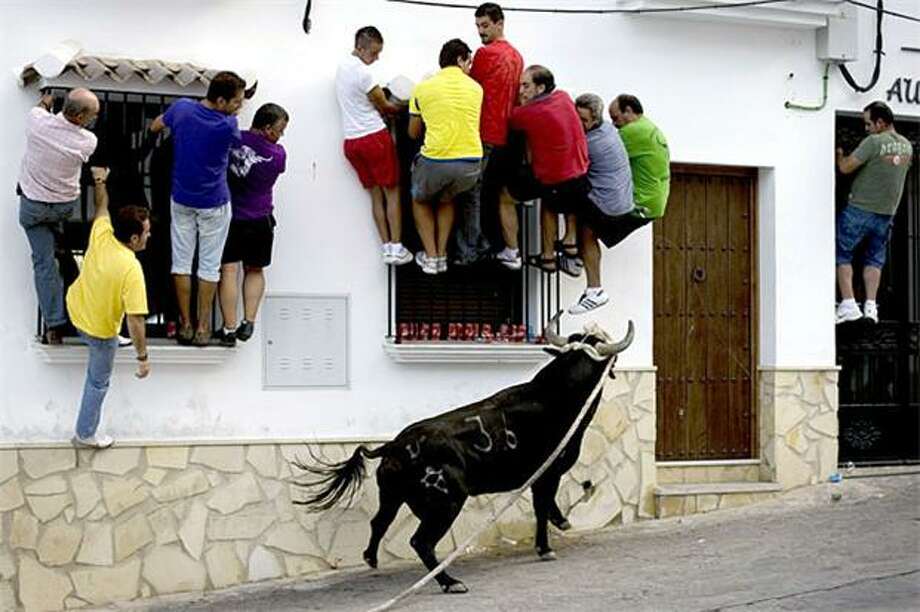 "Eek, el toro! While Pamplona enjoys international recognition for its ""running of the bulls,"" Villaluenga del Rosario, Spain, is mostly ignored for its ""running away from the scary bull on a leash."" Photo: Jorge Guerrero, AFP / Getty Images / AFP / Getty Images"