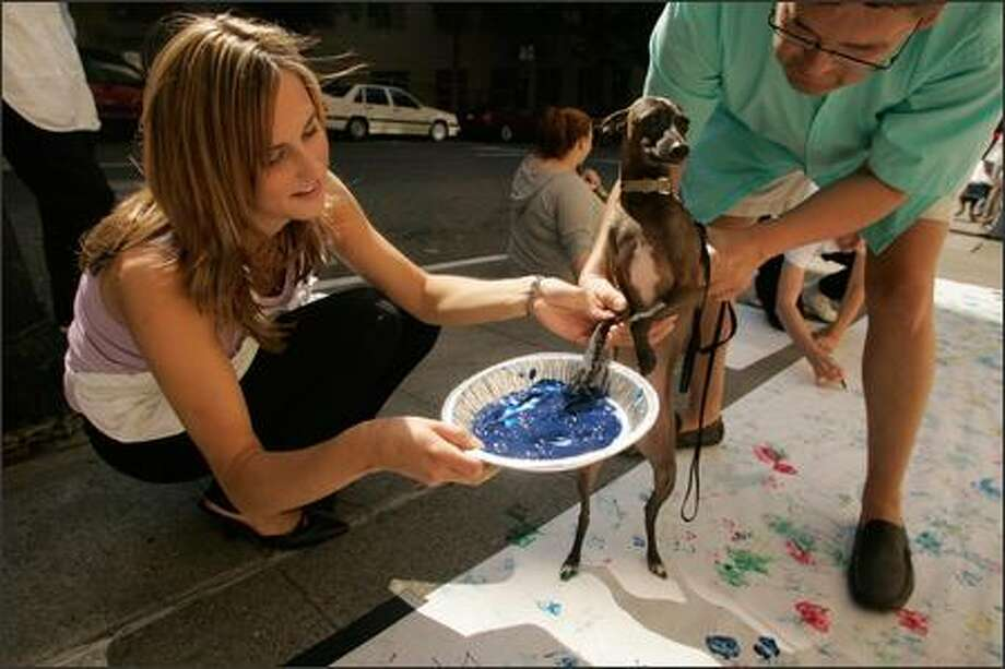 Yvette Lane lends a helping hand as Randy Rudolph of Three Dog Bakery and his best friend, Dash, take part Thursday in the third annual AARF Art and Adoption Day, hosted by the Alexis Hotel in Seattle. Pets put their best paws forward to create a colorful canvas that will be displayed at the adoption center. Photo: Mike Kane, Seattle Post-Intelligencer / Seattle Post-Intelligencer