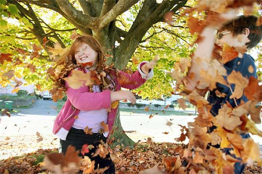 Are you about finished raking the lawn, kids? Erynn Jensen, 9, and her neighbor Robert Schauger, 13, pummel each other with fallen leaves in Bremerton, Wash. Photo: Larry Steagall, Kitsap Sun / Kitsap Sun