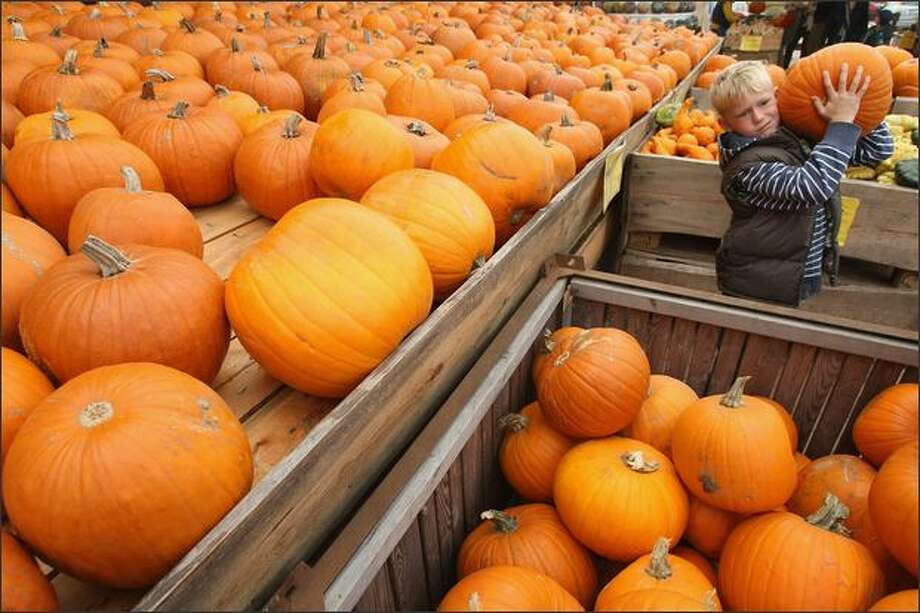 Julian Ulm, 9, chooses a Halloween pumpkin at the Spargelhof Klaistow farm on Sunday in Klaistow, Germany. Spargelhof Klaistow, which has a family fun park built to the theme of pumpkins, grows 400 different kinds of pumpkins and squash. Photo: Getty Images / Getty Images