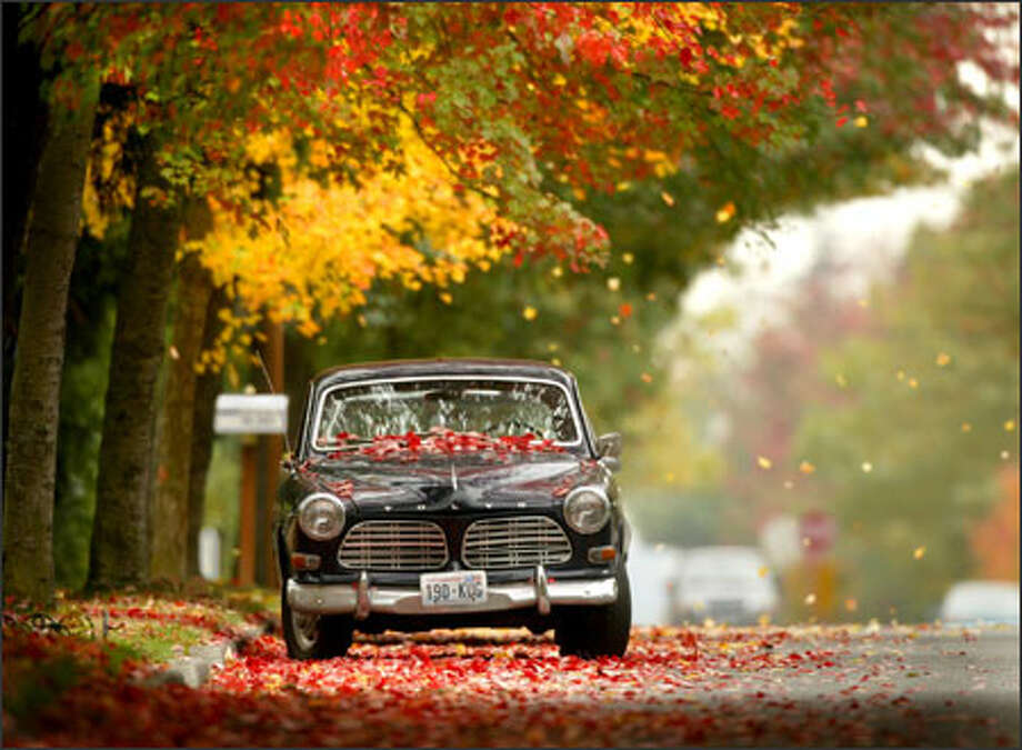 Falling leaves make a splash of color along Fifth Avenue Northeast near Northeast 145th Street in Shoreline. Photo: Joshua Trujillo, Seattlepi.com / Seattle Post-Intelligencer