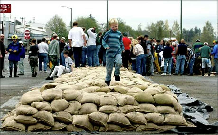 """While the others fill bags with sand and place them in piles to stop the Skagit River from flooding downtown Mt. Vernon, Saga Jones, 5, does what he can, running up and down the bags, """"helping"""" to compact them. Photo: Grant M. Haller, Seattle Post-Intelligencer / Seattle Post-Intelligencer"""