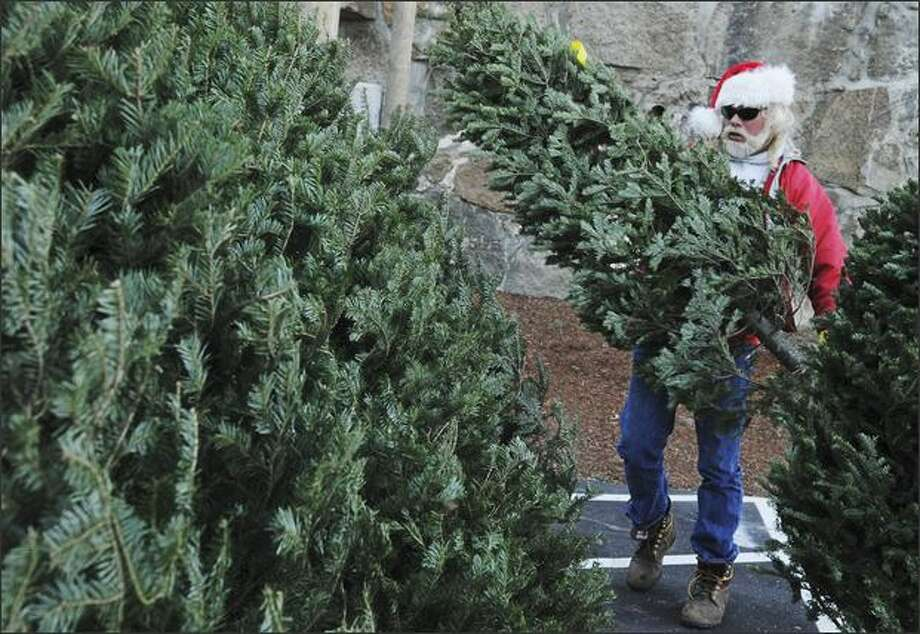 Kenny Pursley, of Gloucester, Mass., rearranges Christmas trees for sale on Friday in Gloucester, Mass. (Lisa Poole/AP)