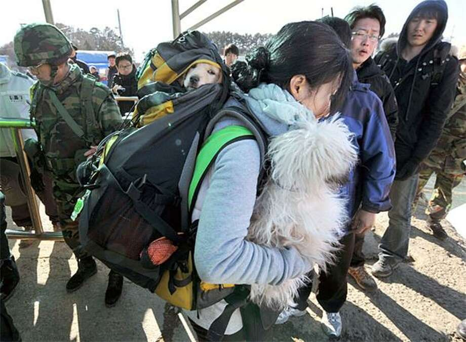 Left behind:A woman carries an abandoned dog in her hand and one in her backpack before departing South Korea's Yeonpyeong Island. The pooches and hundreds of other pets were left behind when the government evacuated the island following North Korea's attack. Some 12,000 people have signed an online petition urging South Korea to evacuate, feed and shelter the animals. Photo: Kim Jae-Hwan, AFP / Getty Images / AFP / Getty Images
