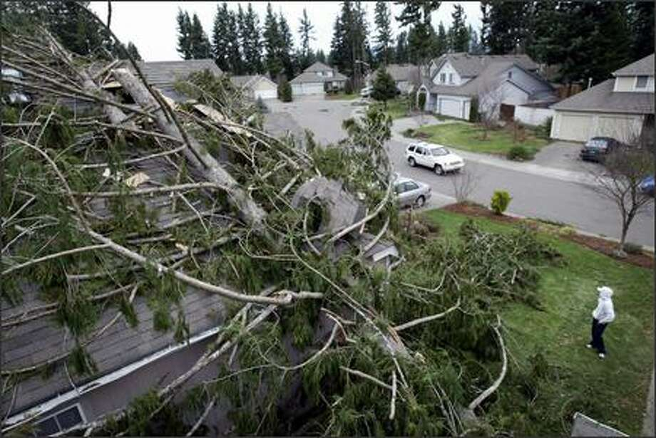 Jennifer Davis pulls branches off a large tree that fell on the home of her aunt and uncle in Maple Valley. Photo: Joshua Trujillo, Seattlepi.com / seattlepi.com