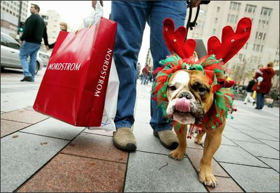 "Lt. Columbo, an English Bulldog, licks his chops as he does a little last minute Christmas shopping as he walks along Pine Street downtown in front of the Westlake Center. He is shopping today with owners Andrew and Terree Kingston of Seattle, who take Lt. Columbo everywhere with them. . ""Everywhere we go, he makes people smile,"" Terre said of the three-year-old hound. Photo: Scott Eklund, Seattle Post-Intelligencer / Seattle Post-Intelligencer"