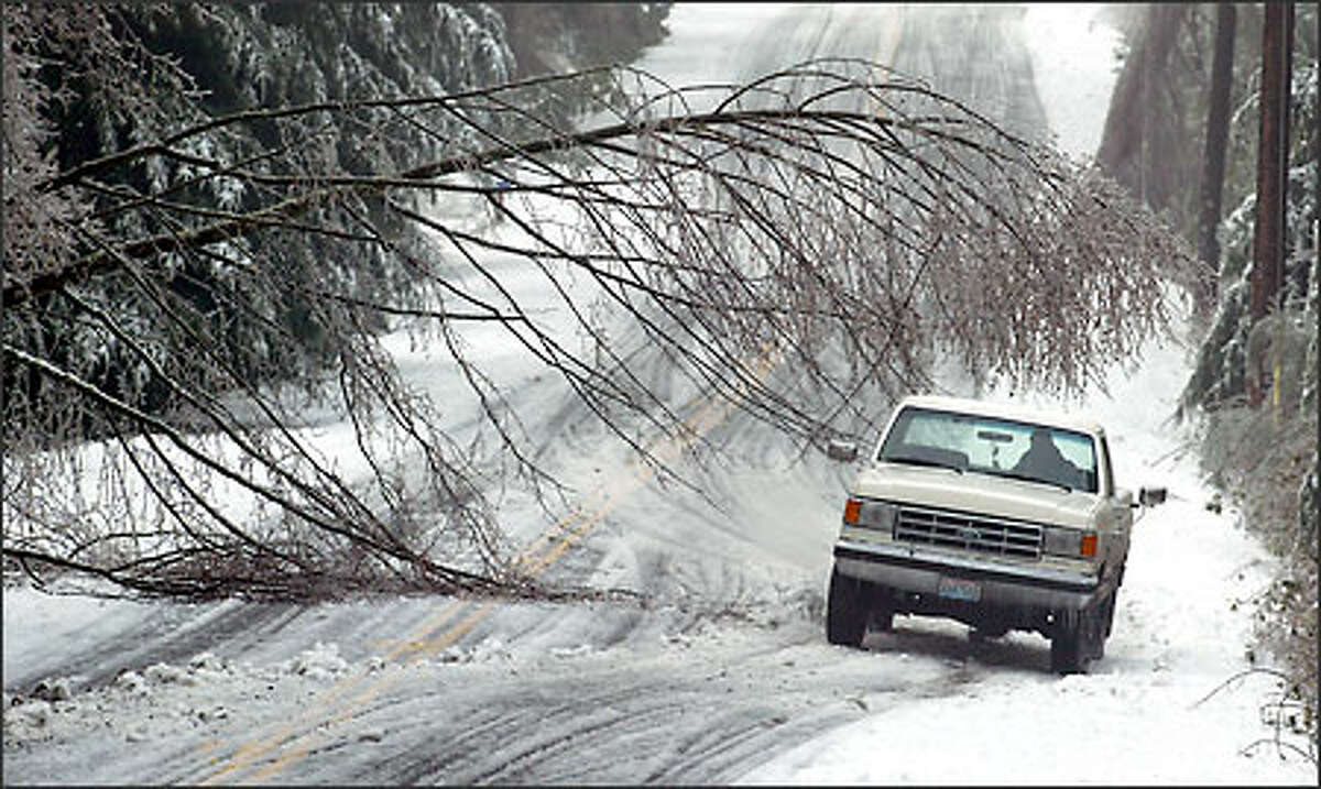 A driver maneuvers his truck under a fallen tree on Vashon's Beall Road. At one point yesterday, all of Vashon's power was out.