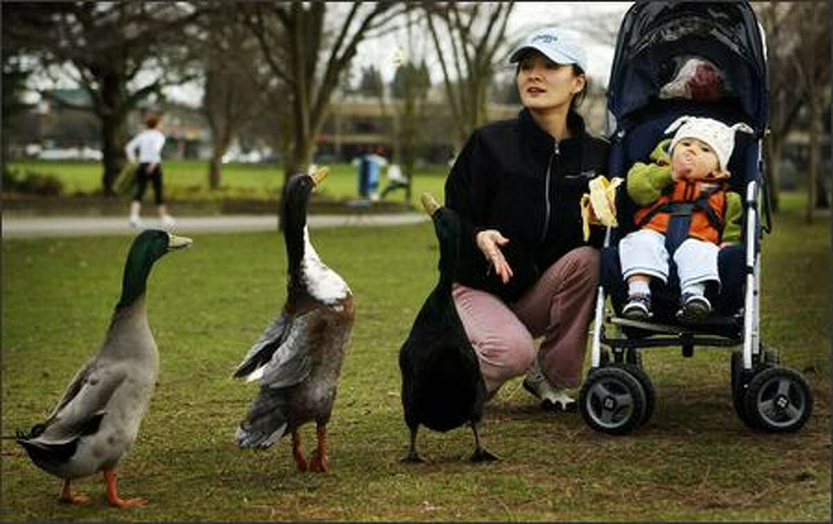 Rebecca Schulze and her 1 year-old son Darius share a banana with ducks at Greenlake on Tuesday.