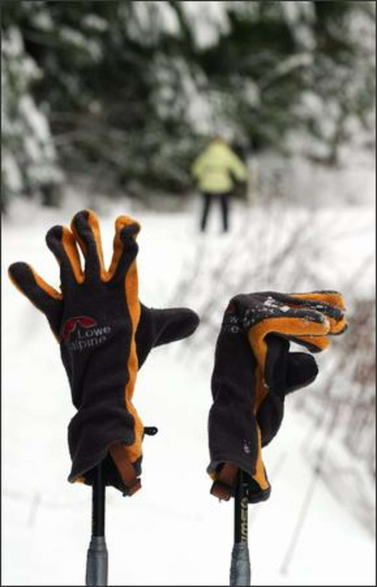 A skier's gloves rest on ski poles during a cross country ski and snow shoe trip with the One World Outing Club near Stevens Pass.