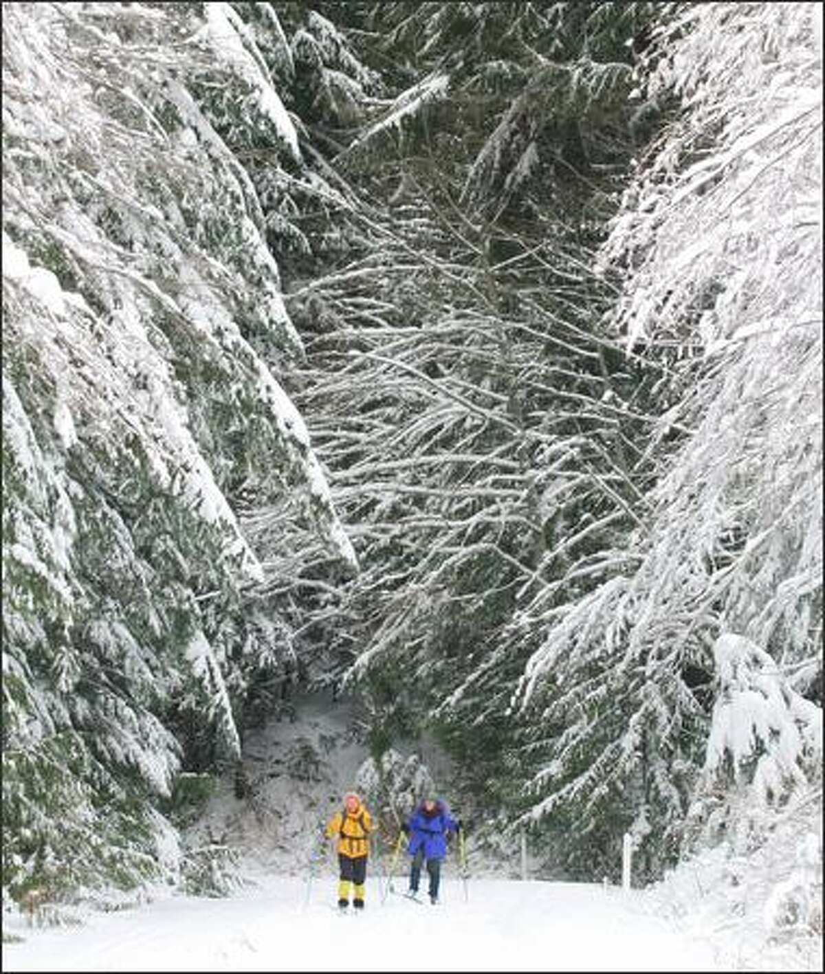 A pair of One World Outing Club members make their way along a dirt road during a cross-country ski and snowshoe trip to Stevens Pass.
