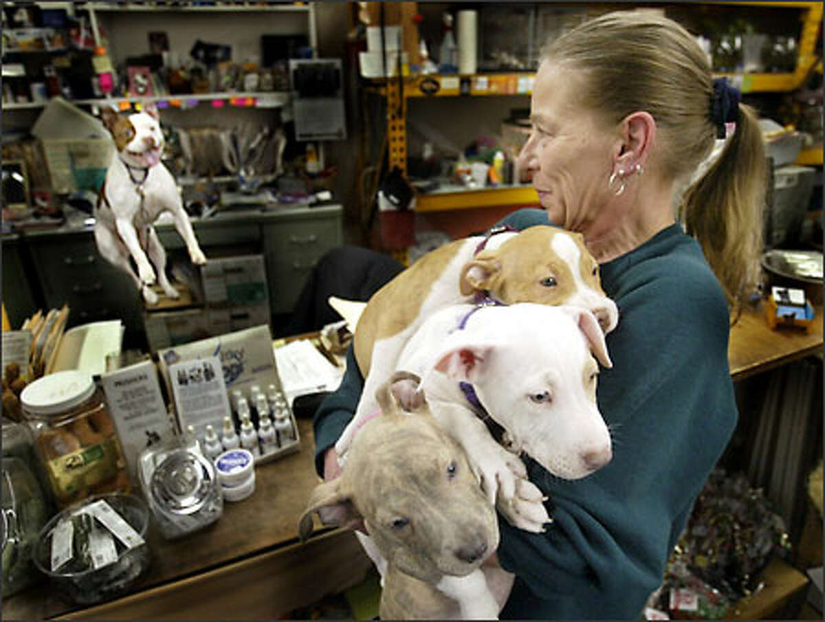 Anne Holte has her hands full with three 11-week-old pit bulls at Ideal Pet Shop in Seattle as Angel jumps up and down behind the counter trying to get in on the action.
