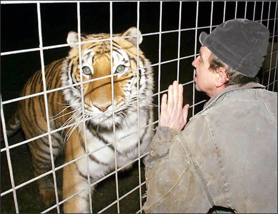 Mike Jones, who lives near Sedro-Woolley, built a 6,000-square-foot pen for his tiger Choi Hu. He fears lawmakers won't stop at the big-cat ban. Photo: Grant M. Haller, Seattle Post-Intelligencer / Seattle Post-Intelligencer