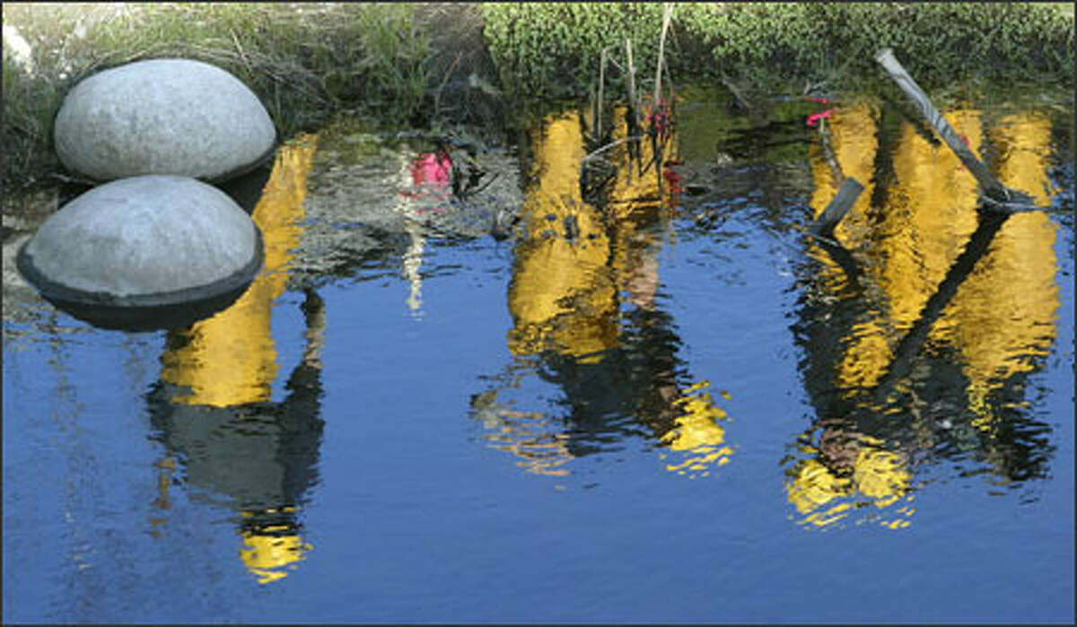 Washington Conservation Corps workers are reflected in Des Moines Creek as they plant trees Tuesday to restore the waterway,