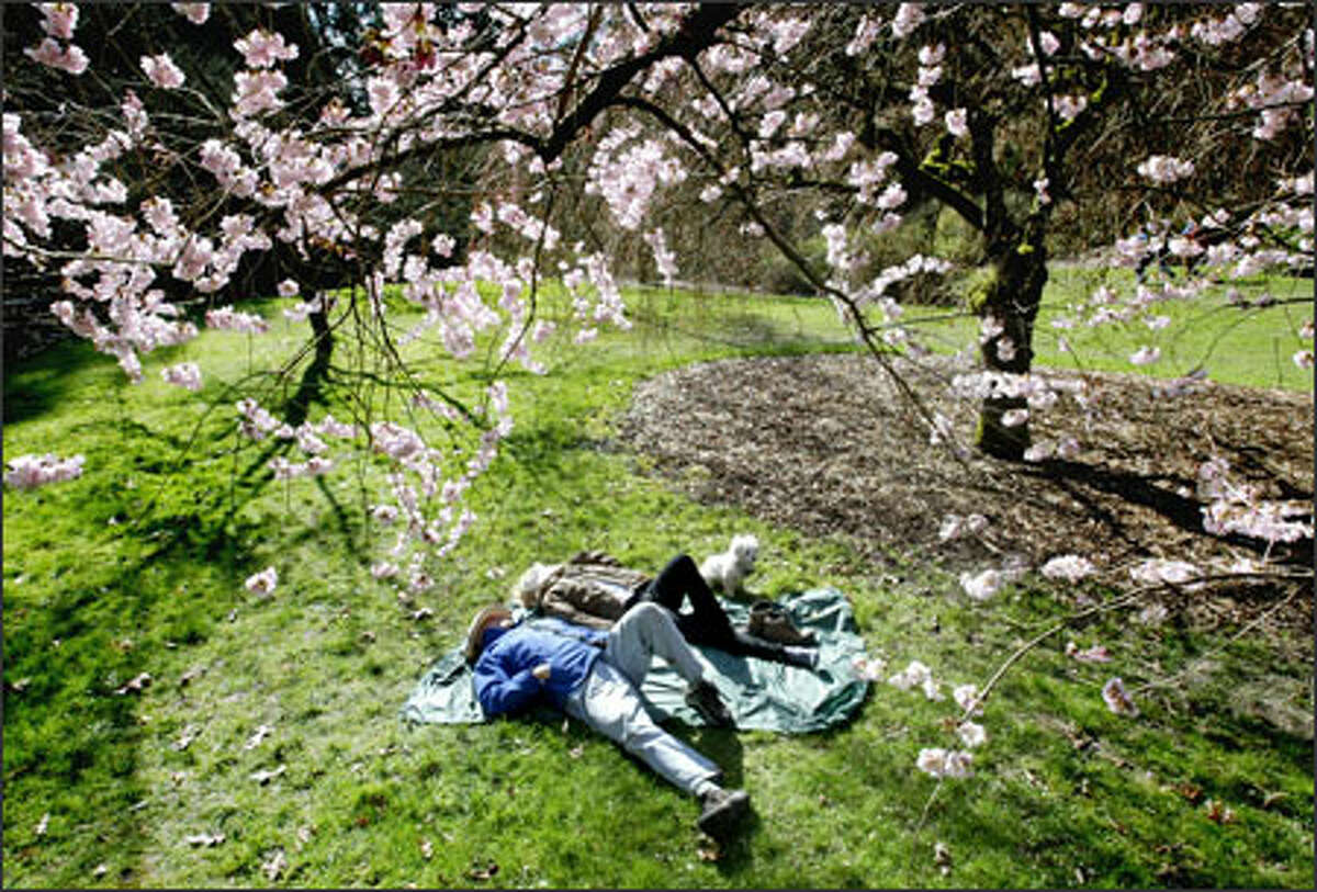 Ron and Bonnie Reese of Seattle, with dog Joshua, rest under a flowering cherry tree in the Arboretum that Ron called