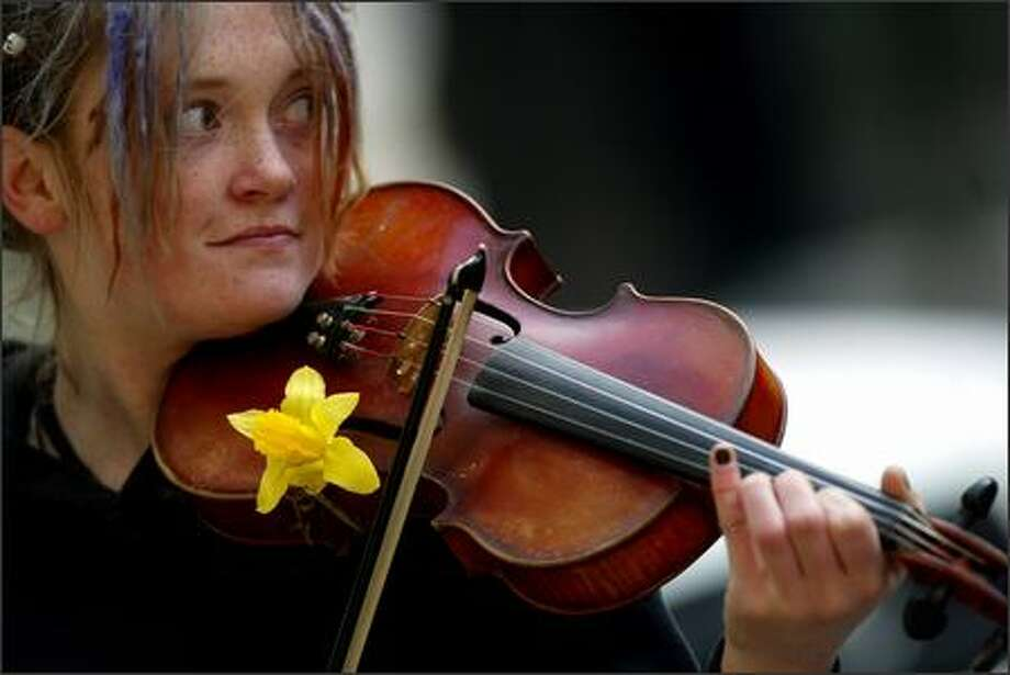 Elena Dorn from Seattle stuck a daffodil inside the F hole of her violin as she plays outside Pacific Place in downtown Seattle. Photo: Karen Ducey, Seattle Post-Intelligencer / Seattle Post-Intelligencer
