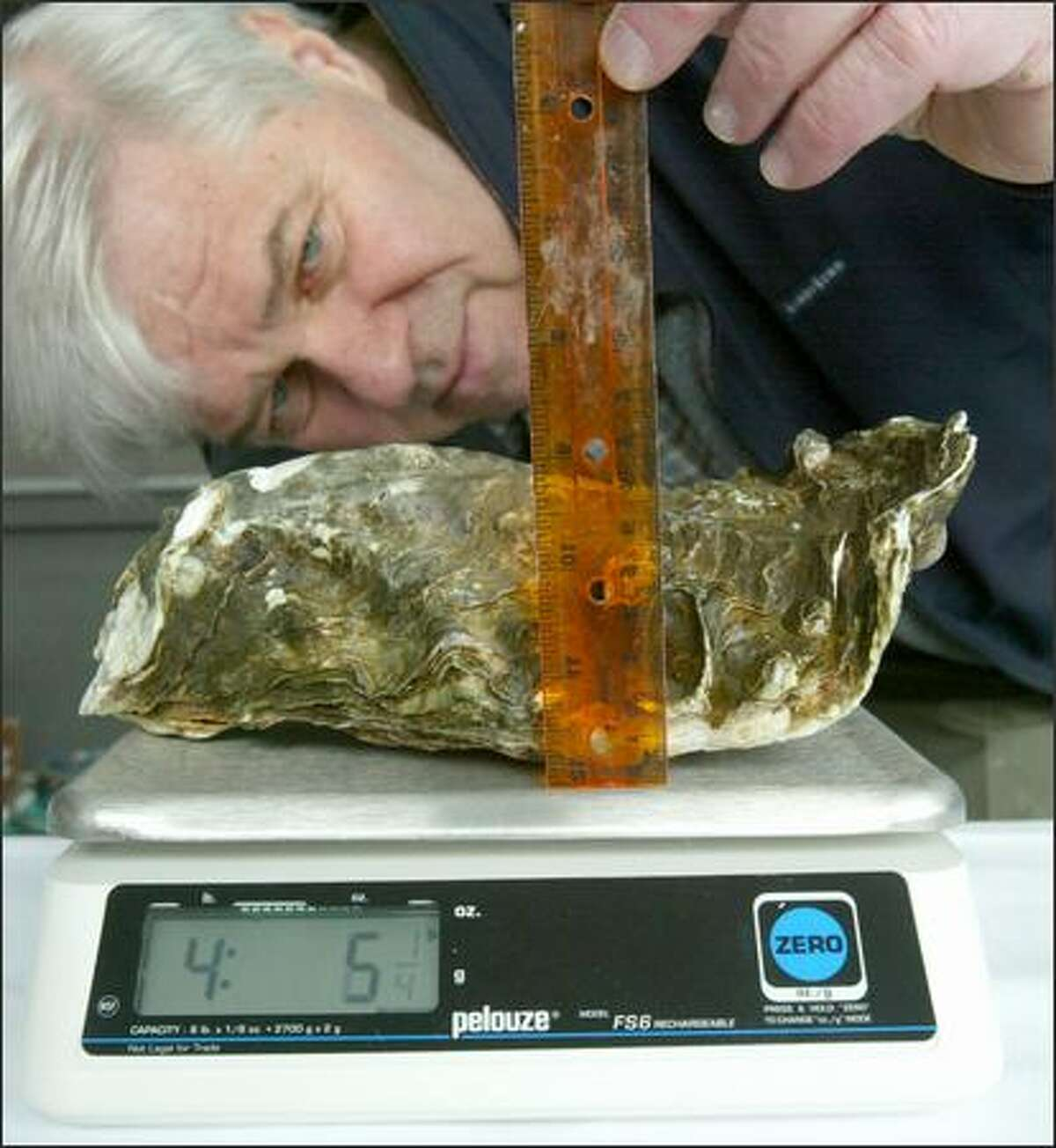Jon Rowley, master of ceremonies Tuesday for the 17th Annual Anthony's Oyster Olympics, checks the height of an entry in the largest oyster contest. Although the weight of the rule is added to the scale in this picture, the official weight of the Pacific oyster was 3 pounds, 14 ounces. The winner, a tad heavier, was picked by Arthuro Martinez of Taylor Shellfish. More than 800 dozen regular-size oysters were weighed, identified, shucked, barbecued or eaten raw, and most went home in the bellies of about 550 people at the sold-out event at the Anthony's restaurant at 6135 Seaview Ave. N.W. The festivities benefited the Puget Soundkeeper Alliance.