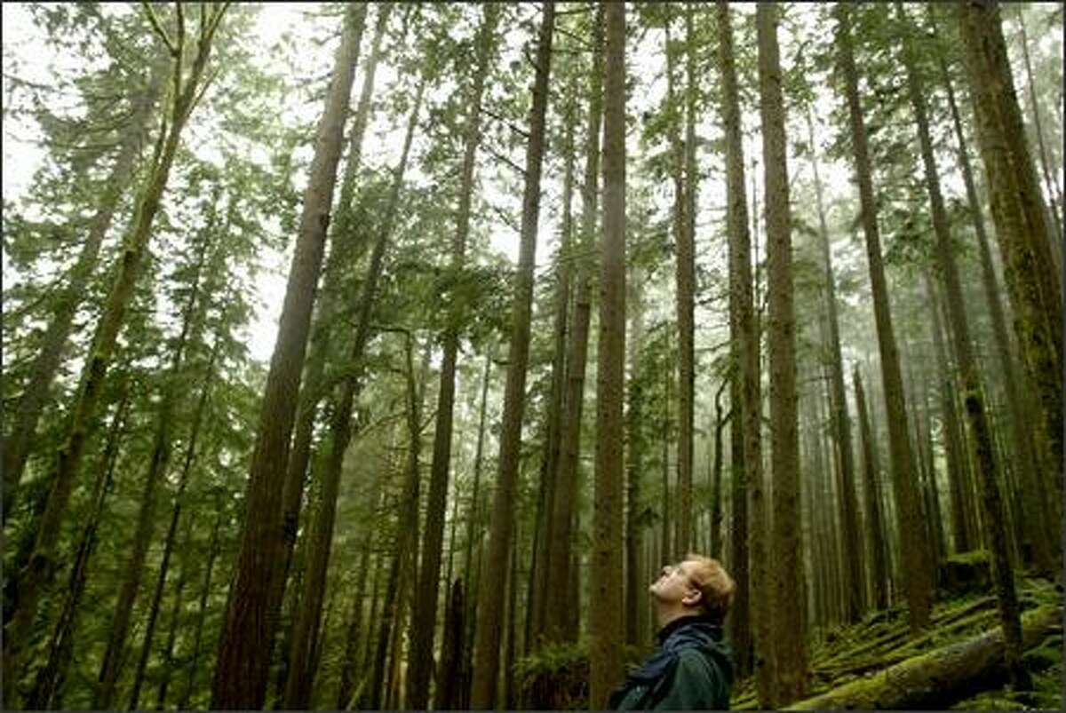 Kenan Block of the Washington Forest Law Center looks for spotted owls in a state-managed forest in Grays Harbor County.