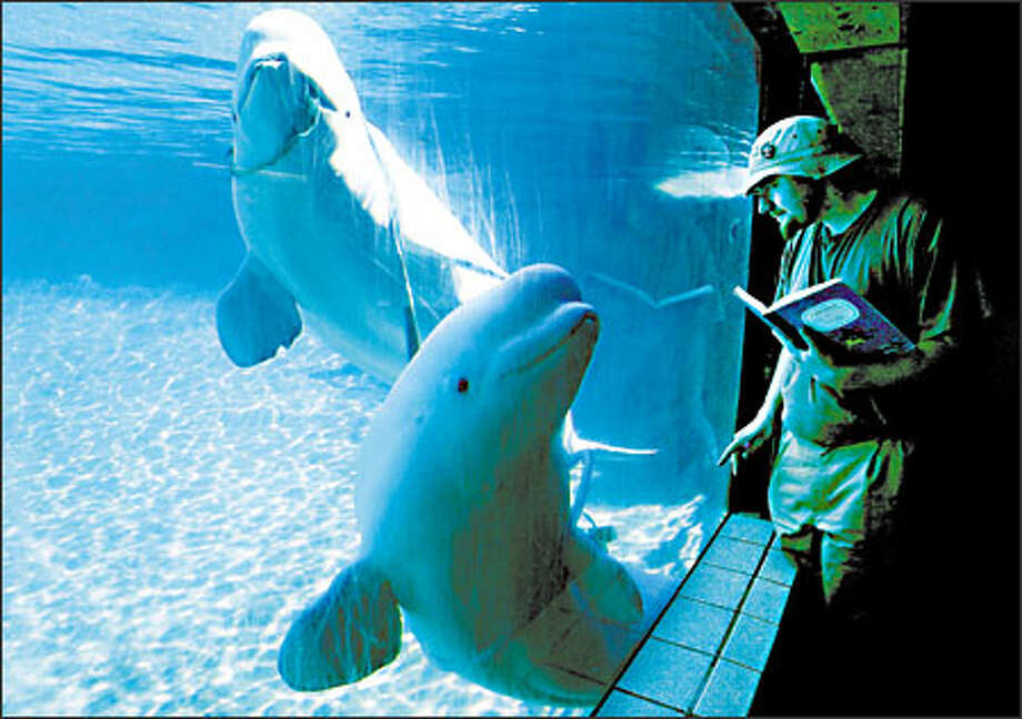 Joe Lemmon, a temp worker with a fascination for beluga whales, spends several hours a day, several days each week observing Beethoven and Turner, the two beluga whales at Tacoma's Point Defiance Zoo and Aquarium. Lemmon has filled notebooks with his observations of their behavior. Photo: Paul Joseph Brown, Seattle Post-Intelligencer / Seattle Post-Intelligencer