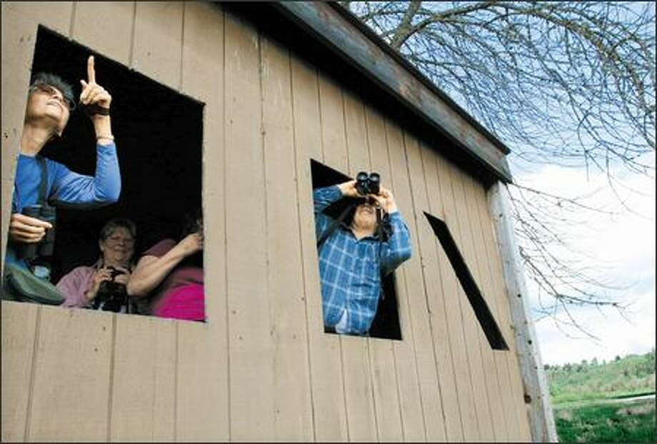 Sharon Ellard of Seattle, left, and her partner Tom Merritt take their turn at the openings in a viewing blind in the River S Unit. The blind offers protected viewing of waterfowl as well as other marshland-oriented birds. Photo: Meryl Schenker, Seattle Post-Intelligencer / Seattle Post-Intelligencer
