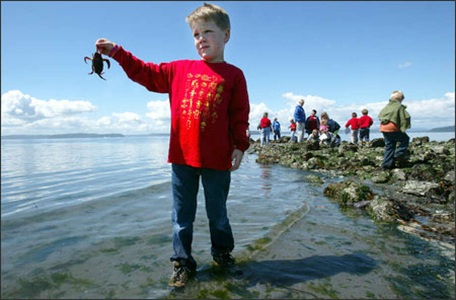 Hundreds of Seattle schoolchildren, including Jonah Harper, 5, took advantage of a very low tide to explore Alki Beach tide pools. Among Jonah's discoveries: a tired crab. Photo: Paul Joseph Brown, Seattle Post-Intelligencer / Seattle Post-Intelligencer