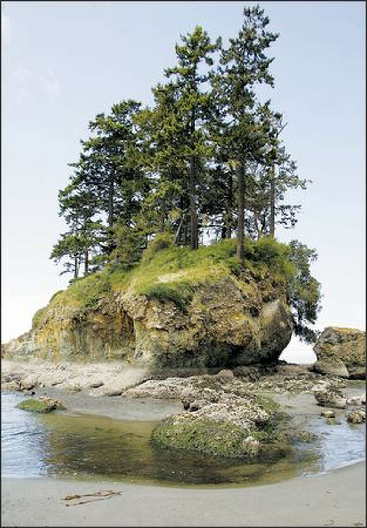 Low tide at Salt Creek County Park reveals some of the best tide pools on the Washington side of the Strait of Juan de Fuca. The park -- the crown jewel of Clallam County -- has more than a mile of stunning rocky shore. The park is a reserve, so don't take anything away.