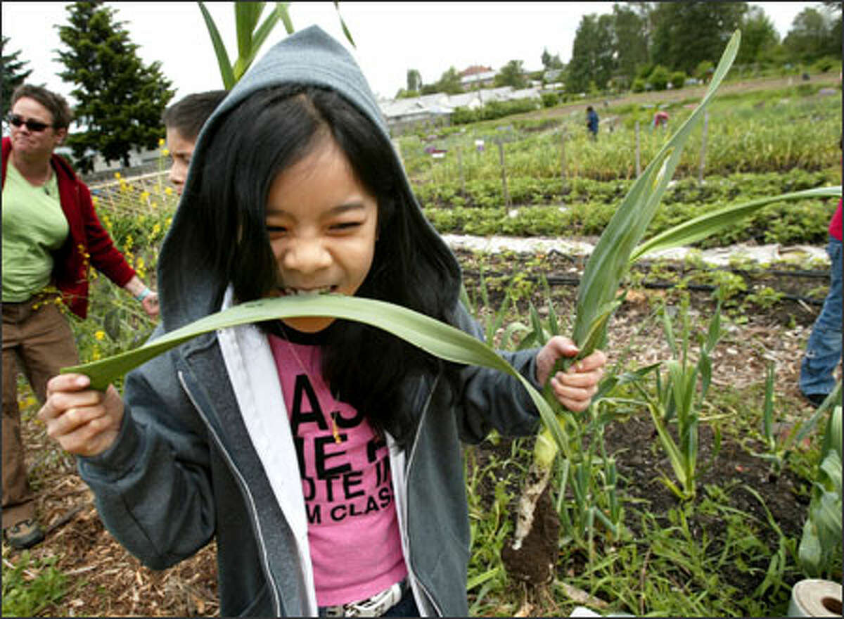 Najah Nuth, 10, a fourth-grader at Concord Elementary in the South Park area, takes a bite out of an organic leek grown at Marra Farm.