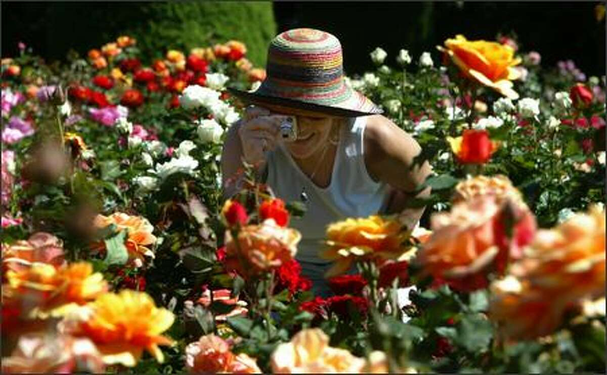 In a sea of roses, Judith Berman stops to take a photo at the Woodland Park Zoo Rose Garden. More than 200,000 people a year visit the garden, which opened in 1924 and has 280 varieties of roses.