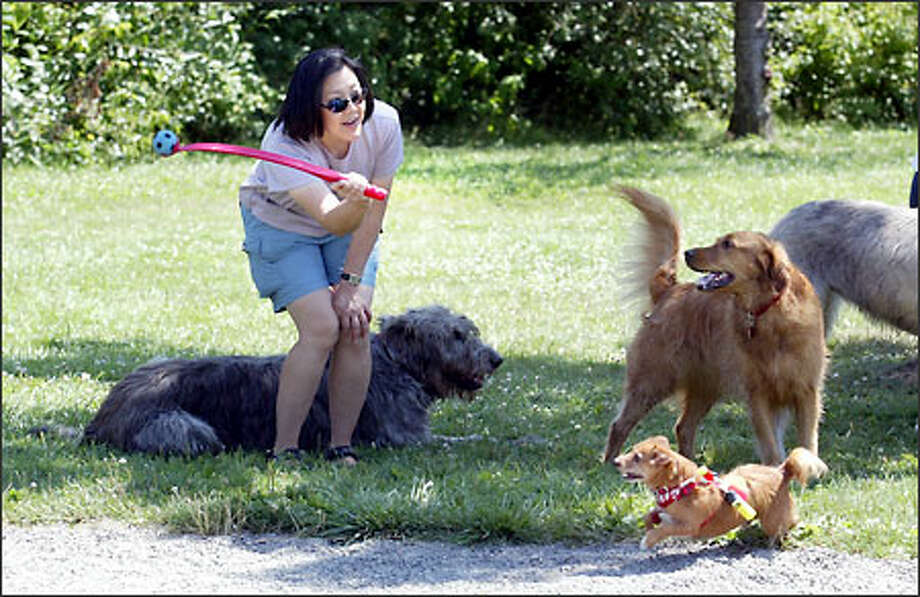 Suchinda Chantarasuksom plays with dogs that regularly run free in Medina Park. The Medina City Council is considering a plan to require dogs to be on leashes in 40 percent of the park -- a proposal that has some dog owners upset. Photo: Scott Eklund, Seattle Post-Intelligencer / Seattle Post-Intelligencer