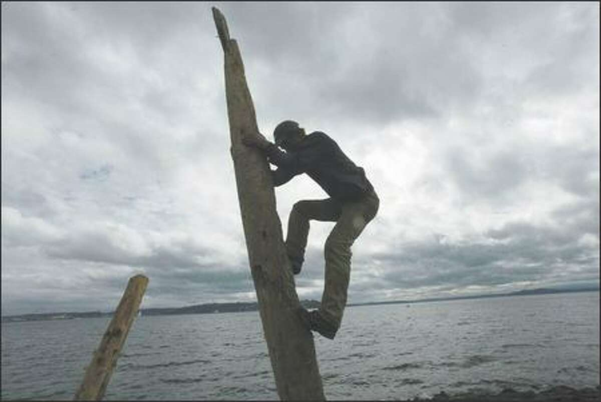 The artist Stacker climbs down Wednesday after placing a smaller piece of driftwood in the neck of a log he incorporated into his sculptures at Myrtle Edwards Park.