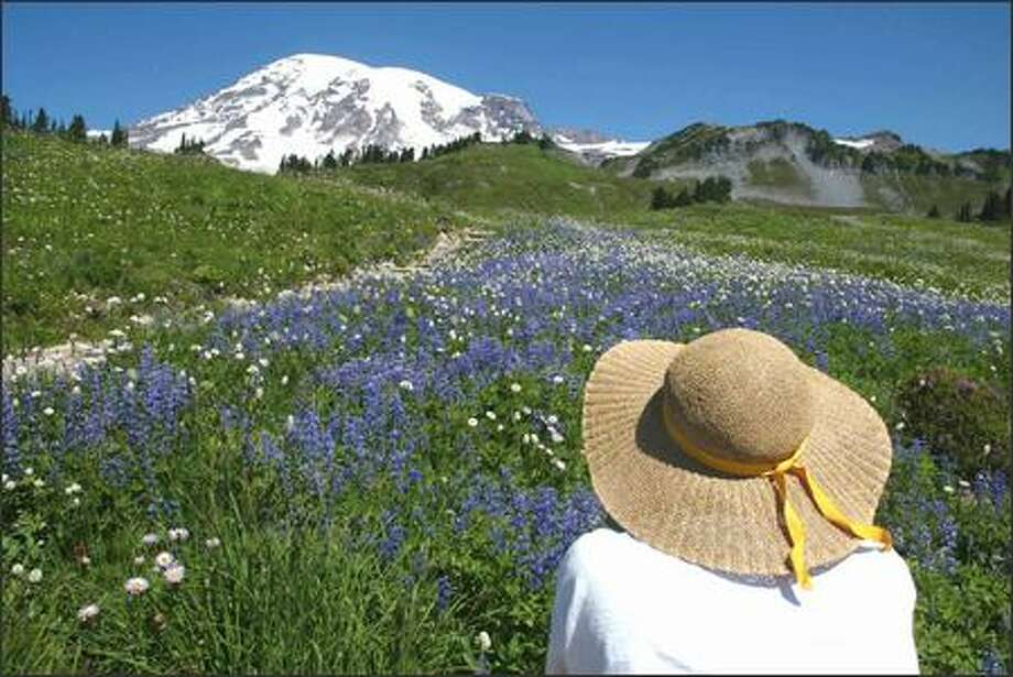 Pat Jordan of Steilacoom stops along the Golden Gate Trail recently to photograph a field of wildflowers with snow-capped Mount Rainier in the background. Photo: Gilbert W. Arias, Seattle Post-Intelligencer / Seattle Post-Intelligencer