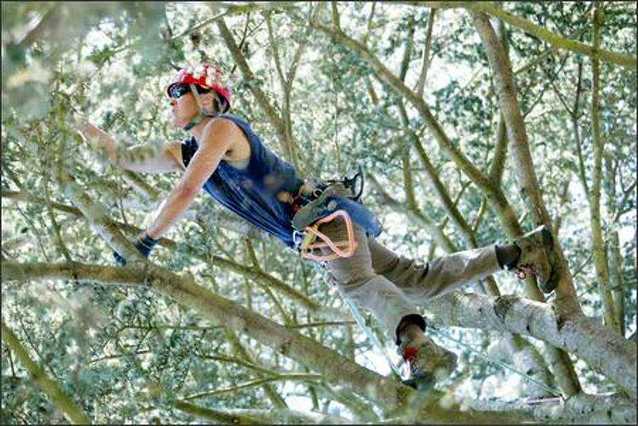 World-class tree climber Kathy Holzer, owner of a pruning service, will compete this weekend in the International Tree Climbing Championship in Minneapolis. Photo: Paul Joseph Brown, Seattle Post-Intelligencer / Seattle Post-Intelligencer