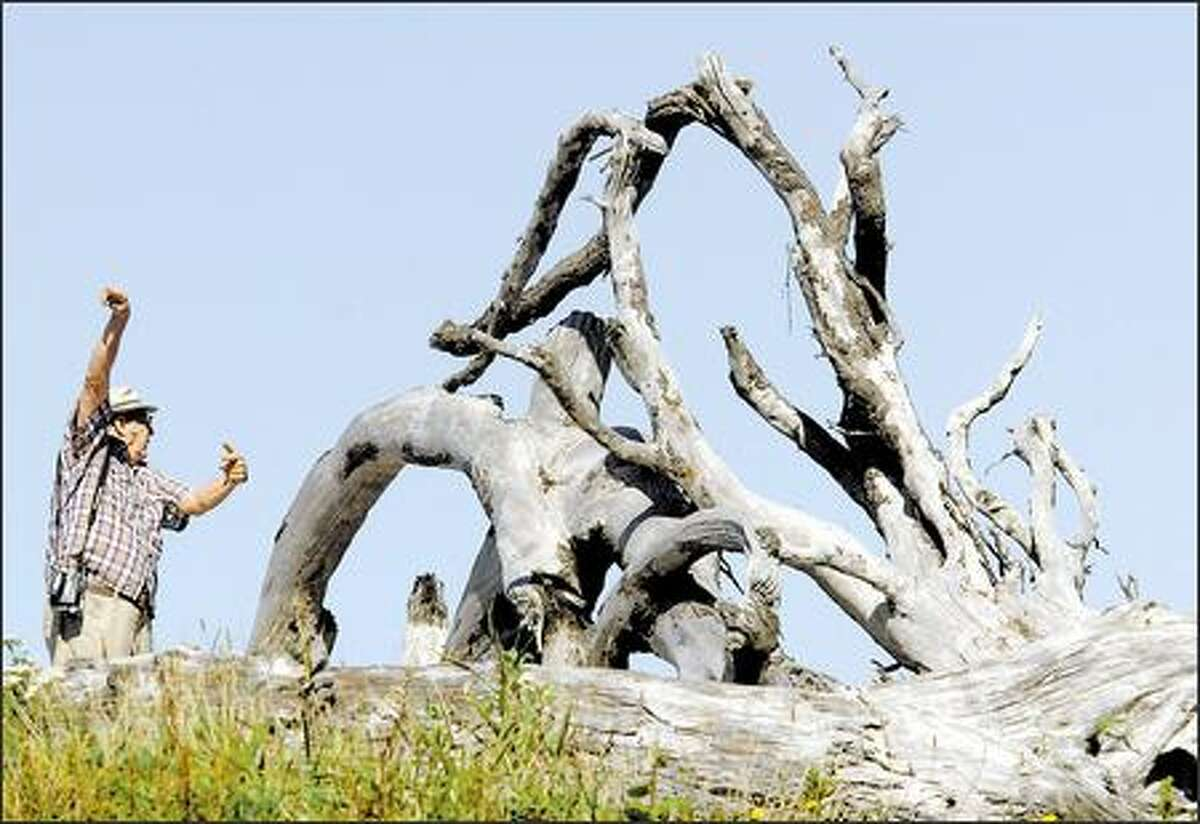 A tourist directs friends to the parking lot at Rialto Beach, where large formations of driftwood are a helpful landmark.