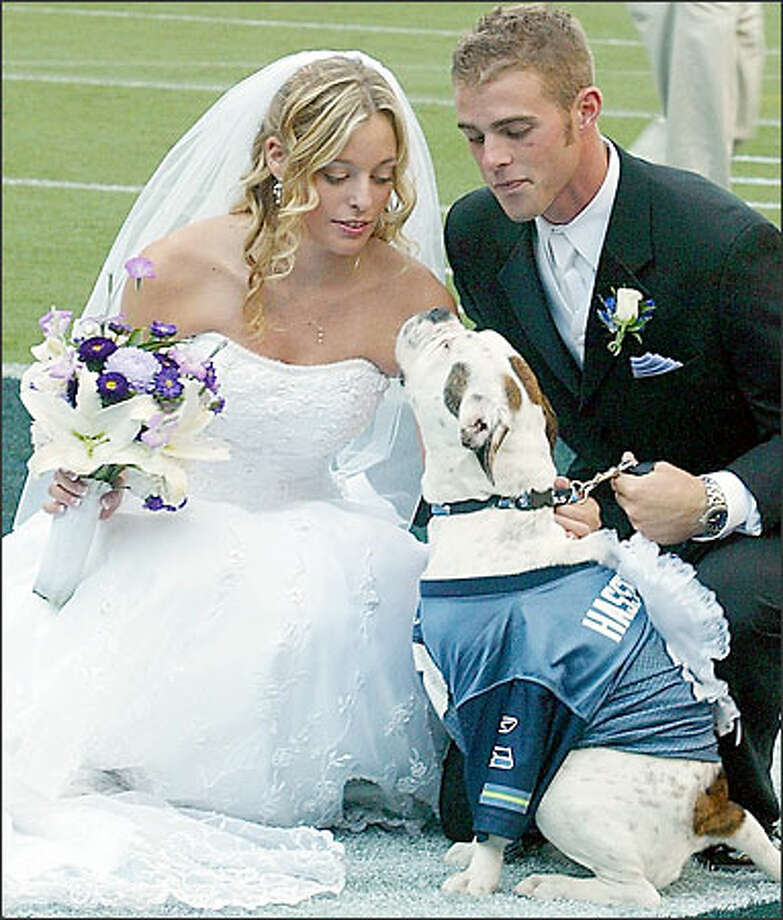 With Fumbles, their 8-month-old bulldog, serving as ring bearer, rabid Seattle Seahawks fans Chris Lundberg and Alexis Russo were married Sunday night in the first-ever wedding on the field at Qwest Field. Photo: Grant M. Haller, Seattle Post-Intelligencer / Seattle Post-Intelligencer