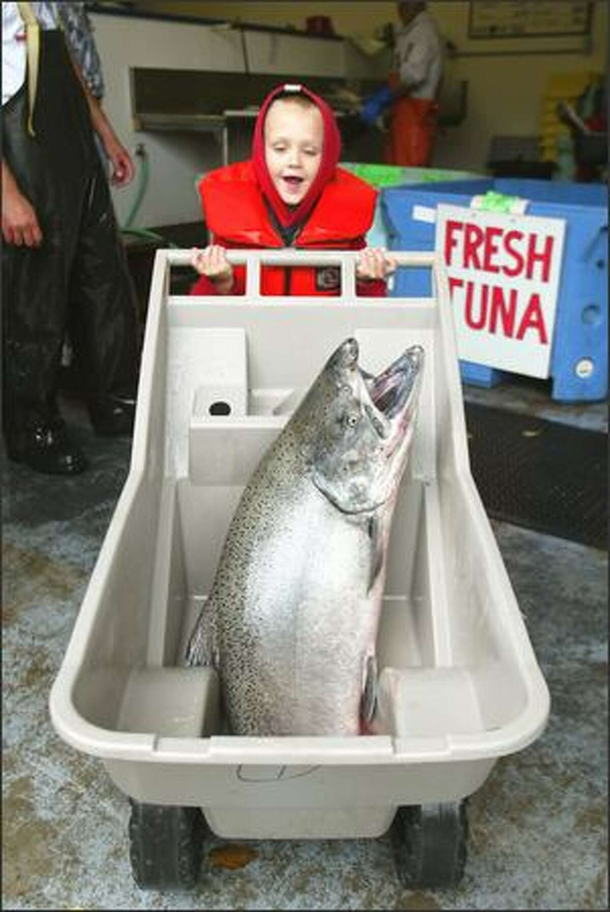 Joey Guntle, 6, of Superior, Mont., tries to wheel a 41-pound king salmon, which his dad, Scott, caught in the Columbia River off Chinook.