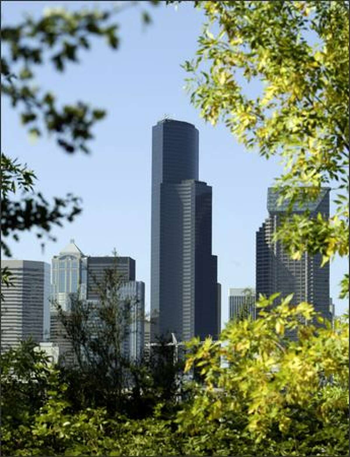 Trees at Dr. Jose Rizal Park on 12th Avenue South frame the downtown Seattle skyline Tuesday.