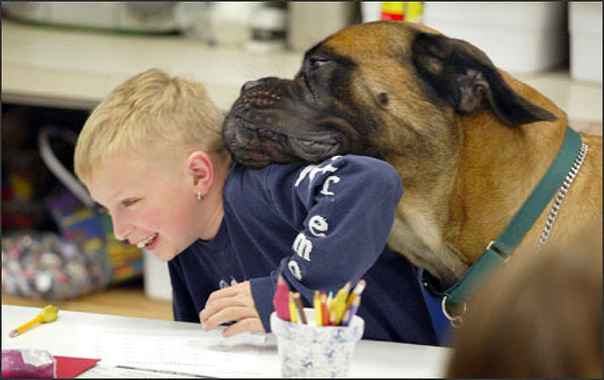 """Austin Ameline, a second-grader at Tacoma's Fawcett Elementary School, provides a shoulder to lean on -- though not exactly by choice -- for Sweetie, the school's unofficial mascot. """"He makes people happy,"""" said owner Terry McCarthy, a librarian at the school. People often do double-takes at his size and ask questions such as, """"Do you have a saddle for that horse?"""""""
