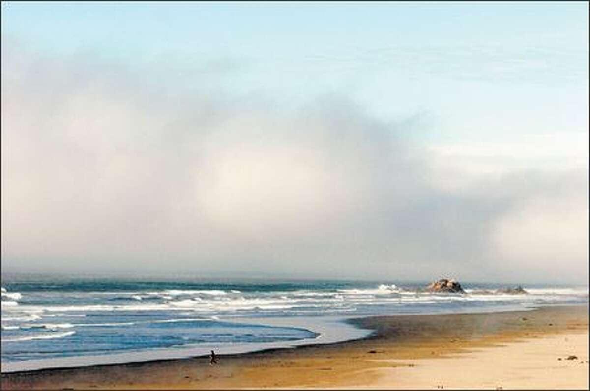 A fog bank rolls in along the Washington Coast just north of Kalaloch.