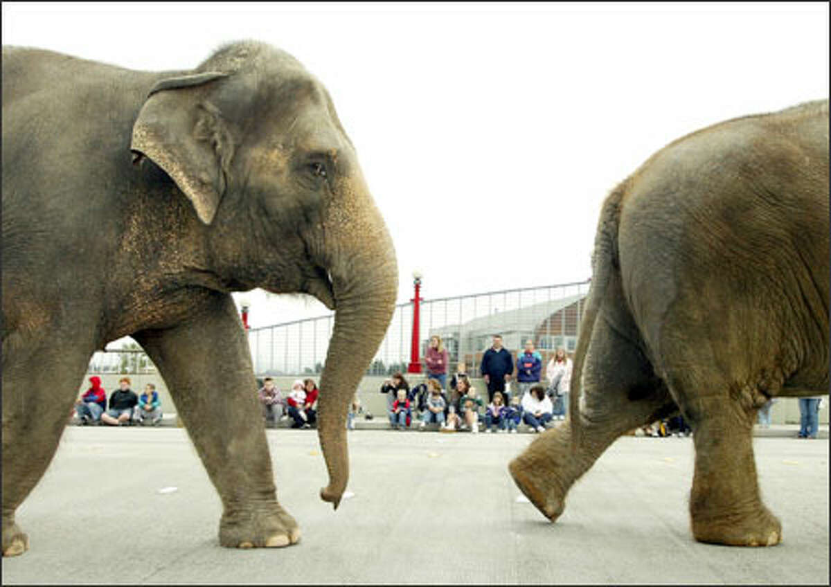 Ringling Bros. and Barnum & Bailey Circus elephants amble along yesterday on the Pacific Avenue overpass from Everett Station to the Everett Events Center. The circus, which begins a four-day run today, is drawing fans as well as foes, who complain it is cruel to its animal stars.