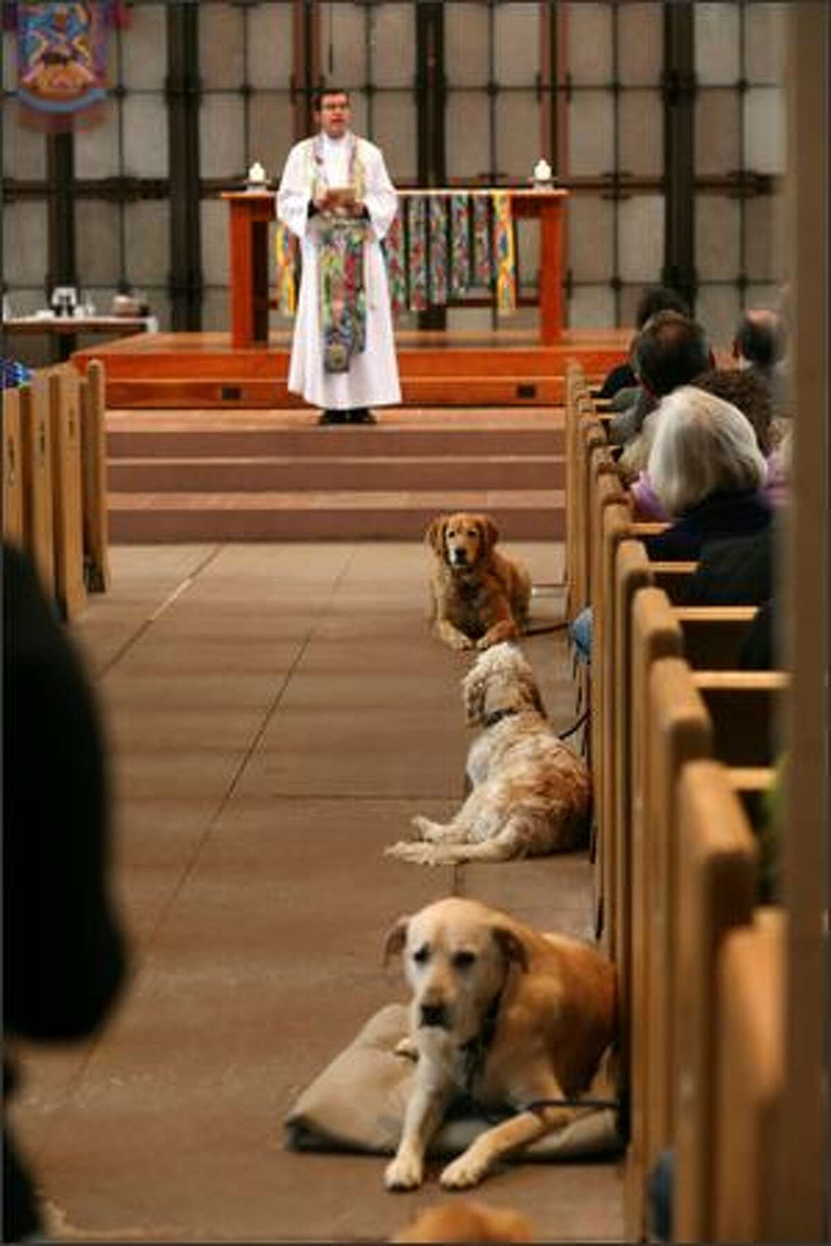 The Very Rev. Robert Taylor, dean of St. Mark's Cathedral, presides over the Blessing of the Animals on St. Francis Sunday.