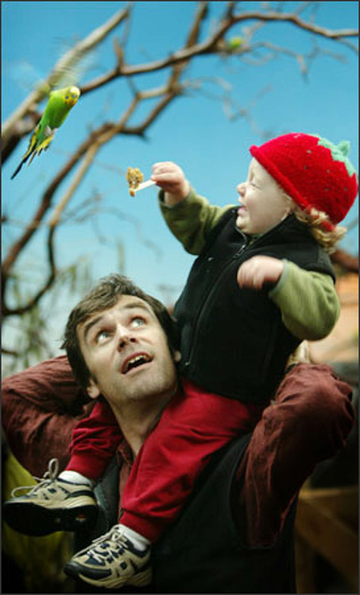 Randy Gladwish holds his son Owen, 20 months, up to feed a hungry bird at Woodland Park Zoo's aviary.