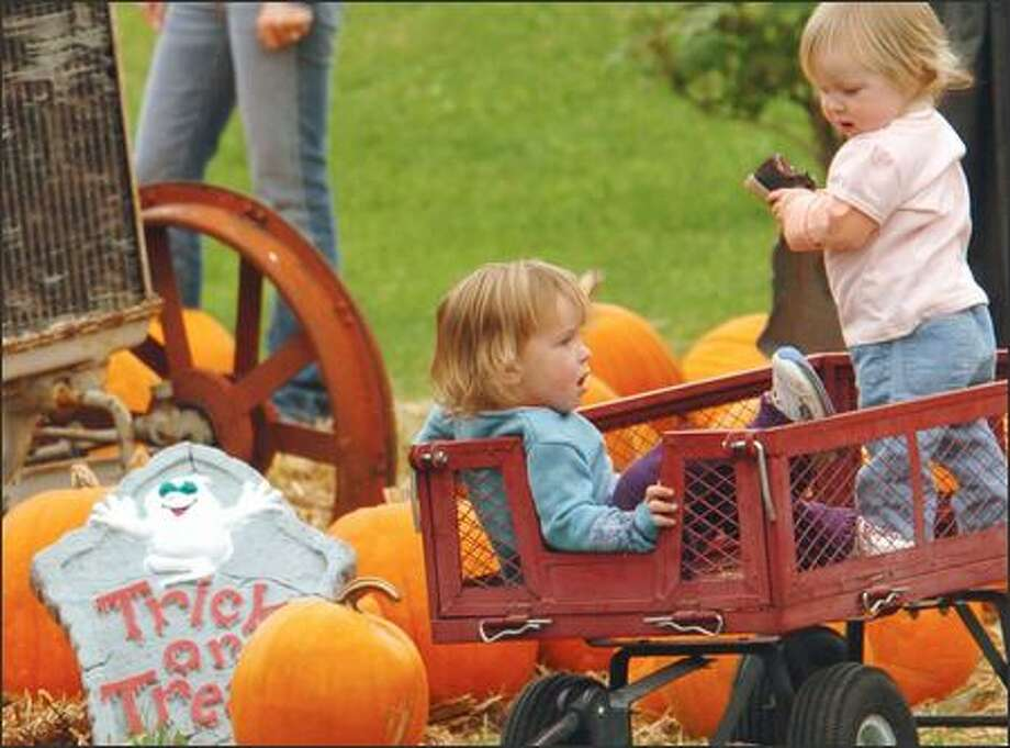Pumpkin patches and corn mazes: Of course. Check out where to go in King, Snohomish, Pierce and Thurston counties. Photo: Jeff Larsen, Seattle Post-Intelligencer / Seattle Post-Intelligencer