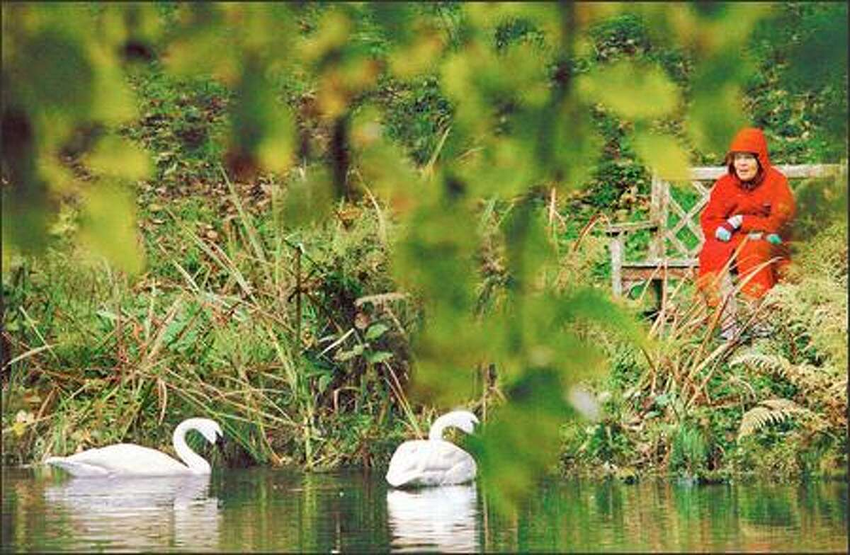 Pat Wilsey, a volunteer at the Bloedel Reserve on Bainbridge Island, says that two resident swans seem to enjoy her conversation during her Friday walks through the 150-acre reserve.
