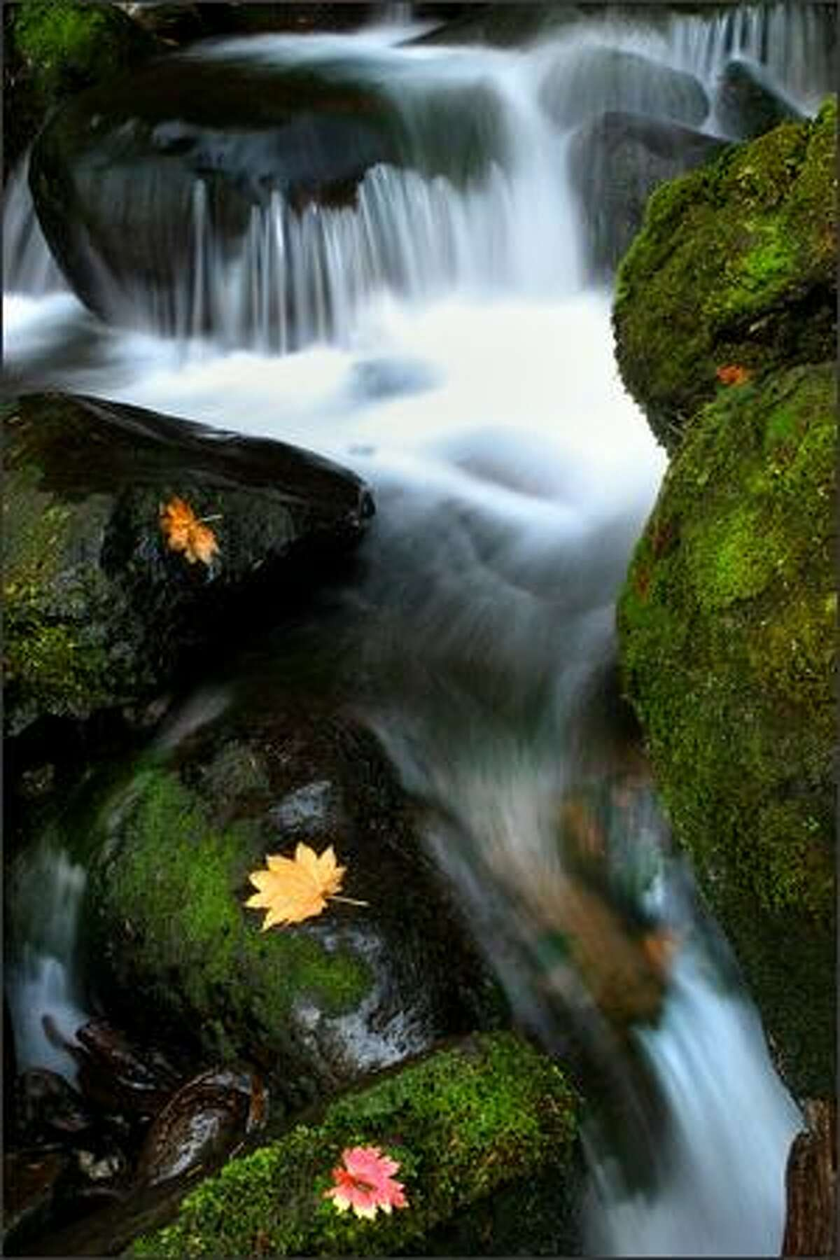 Water cascades down a rock on the southeast side of Lake Quinault Olympic National Park.